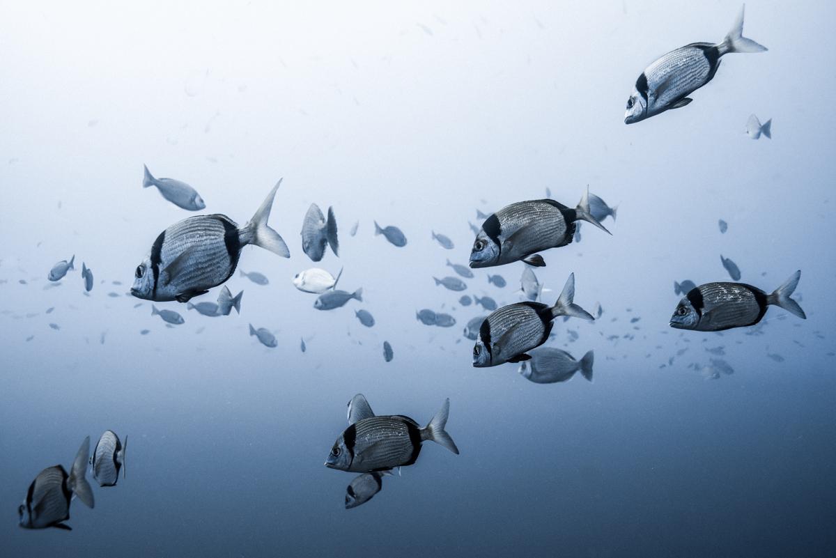 Floating Sars